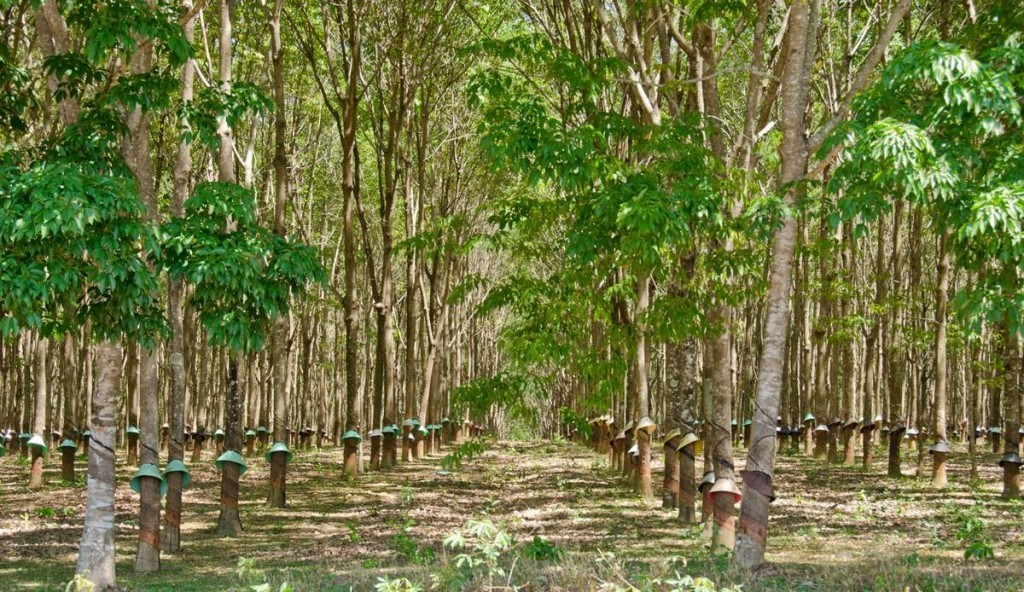 bottes femme woodland des engelures